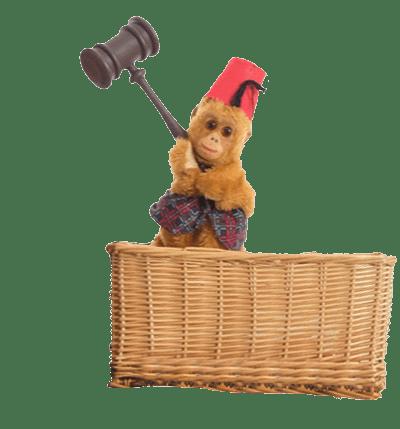 monte the monkey